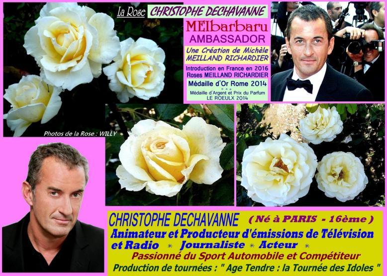 Rose christophe dechavanne meibarbaru ambassador meilland roses passion