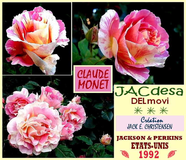 rose-claude-monet-jacdesa-delmovi-roses-striees-christensen-jackson-et-perkins.jpg