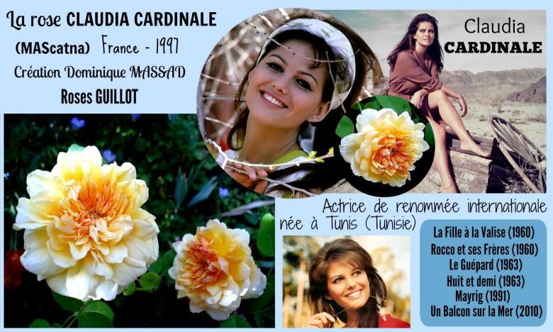 Rose claudia cardinale mascatna massad guillot france 1997 roses passion 2j