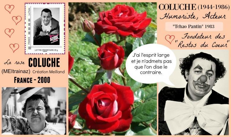 Rose coluche meitrainaz meilland france 2000 roses passion 2j