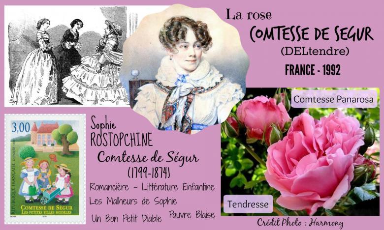 Rose comtesse de segur deltendre comtesse panarosa tendresse delbard france 1992 roses passion 2j