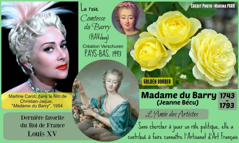 Rose comtesse du barry havobog golden border verschuren pays bas 1993 roses passion 2j