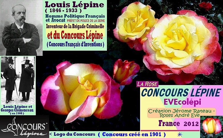 Rose concours lepine evecolepi jerome rateau roses andre eve france 2012