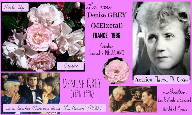 Rose denise grey meixetal make up caprice meilland france 1986 roses passion 2j