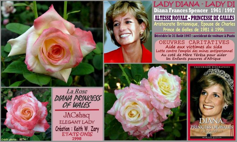Rose diana princess of wales jacshaq elegant lady zary roses passion 2