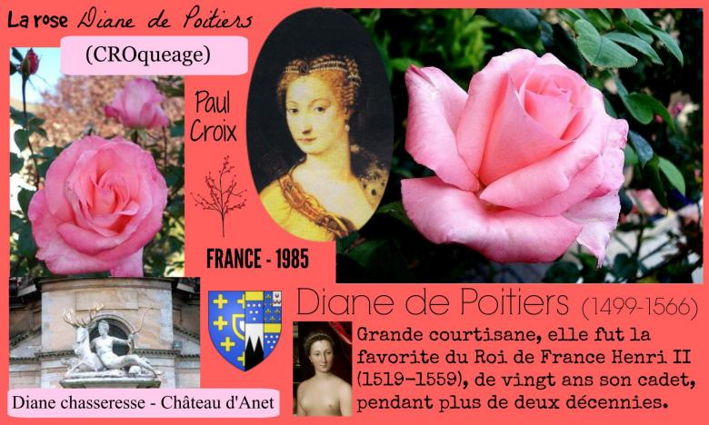Rose diane de poitiers croqueage paul croix france 1985 roses passion 2j