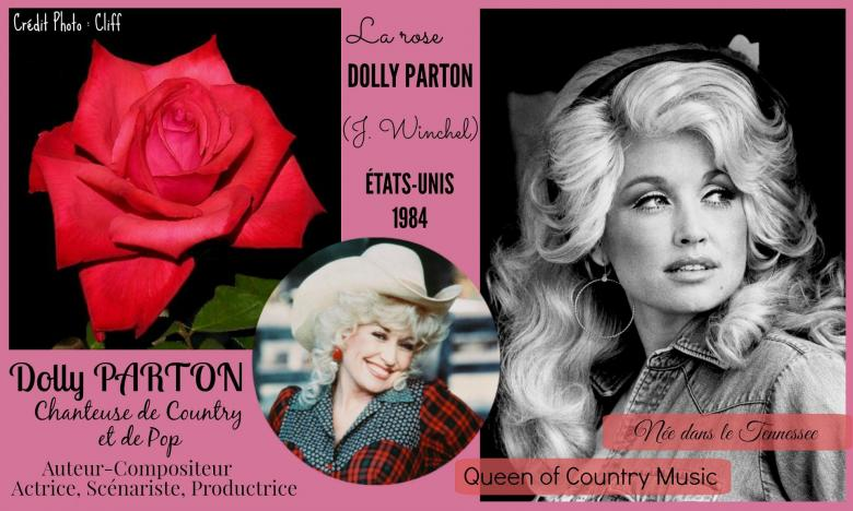 Rose dolly parton winchel etats unis 1984 roses passion 2j