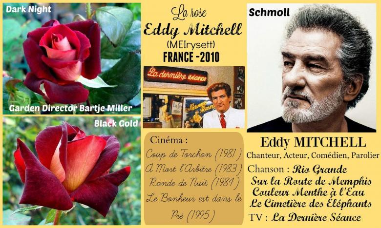 Rose eddy mitchell meirysett dark night black gold garden director bartje miller meilland roses passion 2j