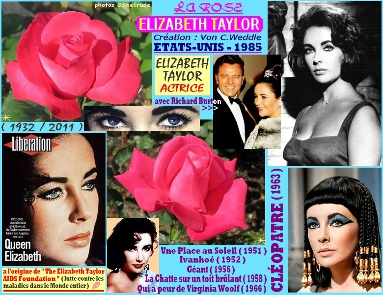 Rose elizabeth taylor von c weddle etats unis 1985 rosespassion 2