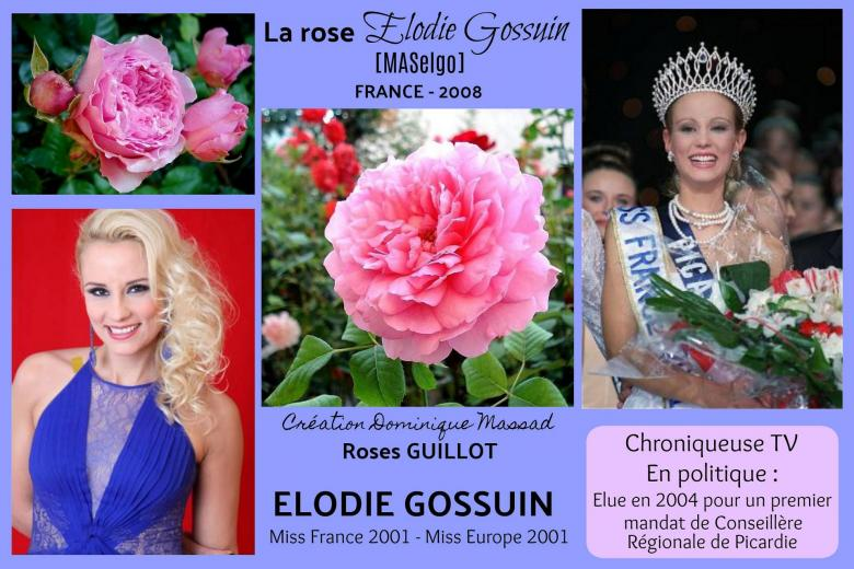 Rose elodie gossuin maselgo dominique massad roses passion