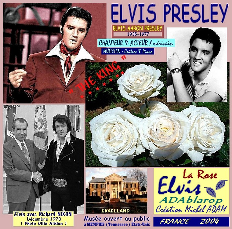 rose-elvis-adablarop-celebrites-elvis-presley-roses-passion.jpg