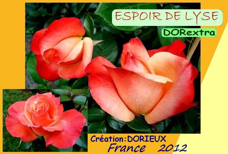 Rose espoir de lyse dorextra dorieux france 2013