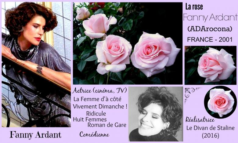 Rose fanny ardant adarocona michel adam france 2001 roses passion 2j