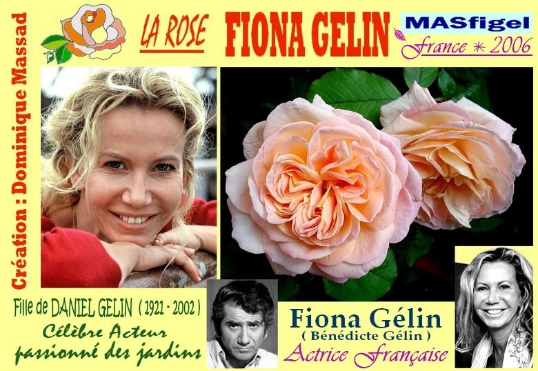 Rose fiona gelin masfigel roses guillot dominique massad france 2006