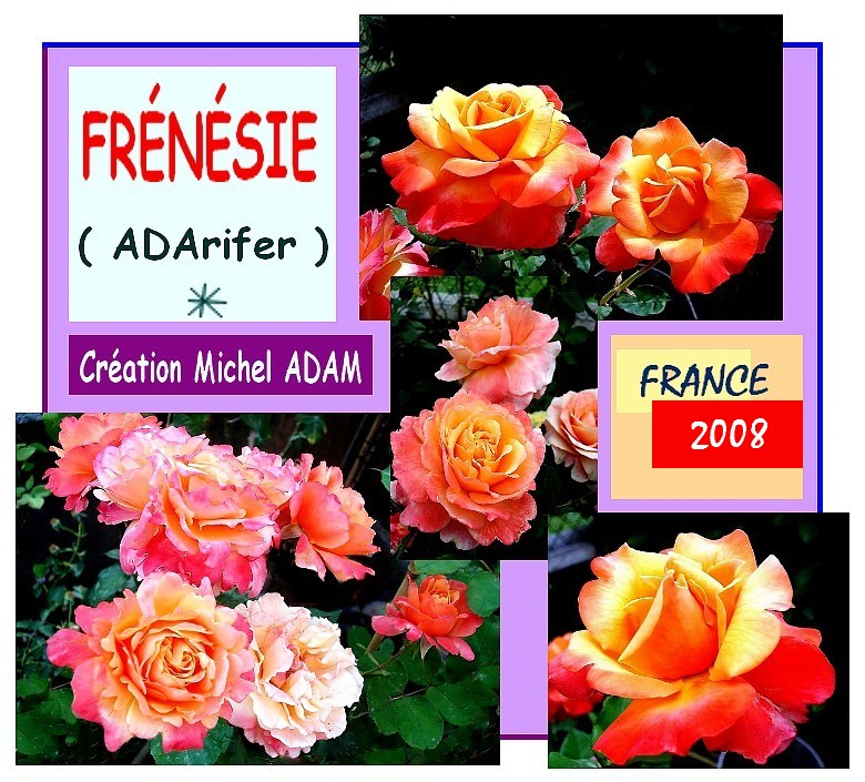 rose-frenesie-adarifer-creation-michel-adam-roses-passion.jpg