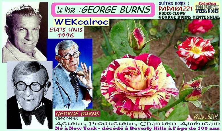 Rose george burns wekcalroc paparazzi rodeo clown tom carruth weeks roses 1996 rosespassion