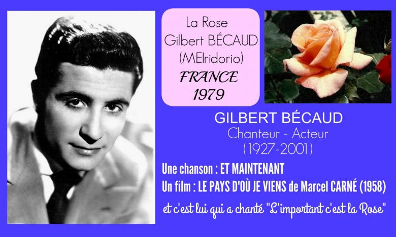 Rose gilbert becaud meiridorio meilland roses passion 22j