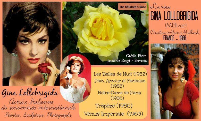 Rose gina lollobrigida meilivar the children s rose alain meilland roses passion 2j