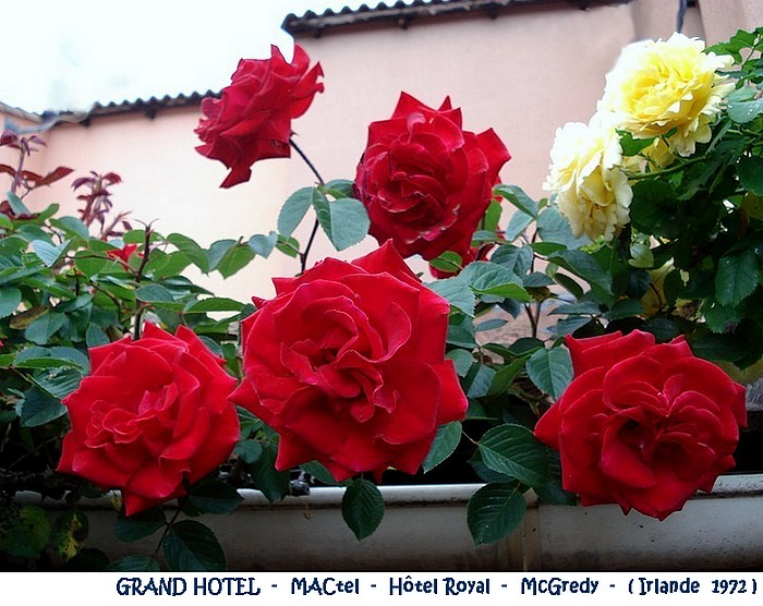 rose-grand-hotel-mactel-hotel-royal-mcgredy-irlande-1972.jpg