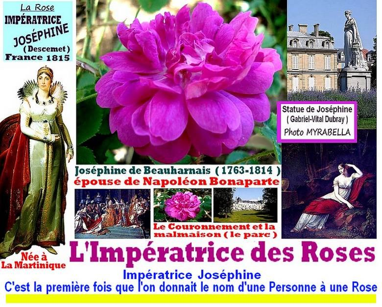 rose-imperatrice-josephine-celebrites-empress-josephine-roses-passion.jpg