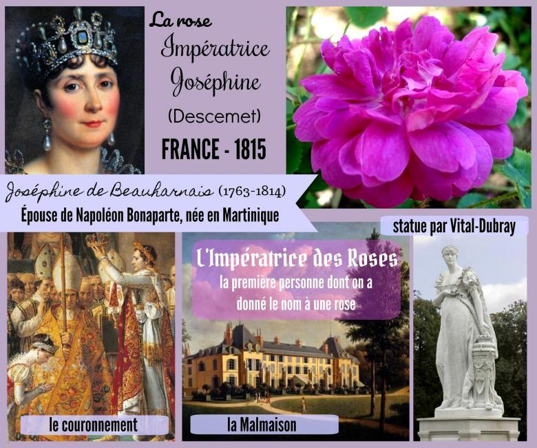 Rose imperatrice josephine empress josephine descemet 1815 roses passion