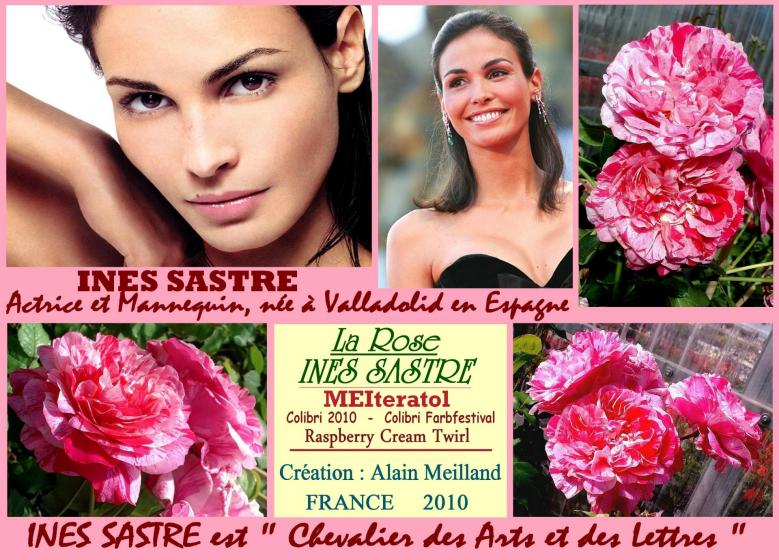 Rose ines sastre meiteratol colobri 2010 colibri farbfestival raspberry cream twirl meilland roses passion