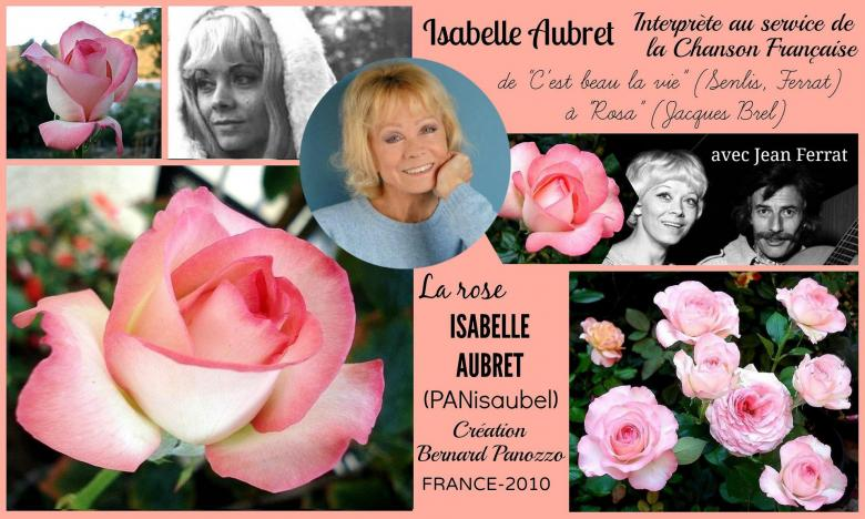 Rose isabelle aubret panisaubel bernard panozzo france 2010 roses passion 2j