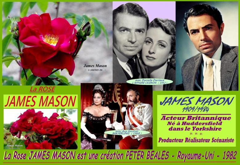 Rose james mason peter beales ava gardner danielle darrieux roses passion