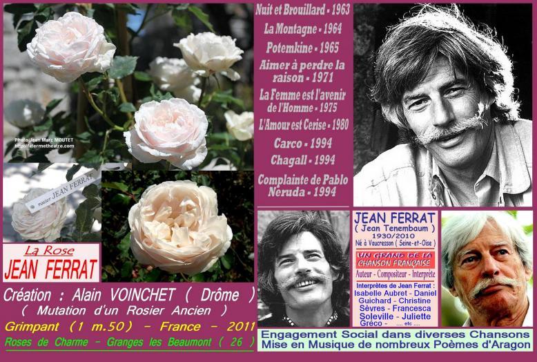 Rose jean ferrat alain voinchet france 2011 roses passion