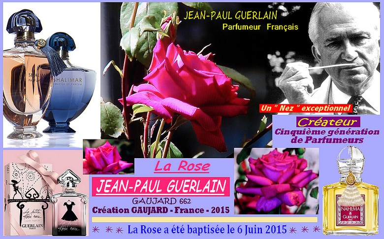 Rose jean paul guerlain gaujard 662 gaujard france 2015 roses passion