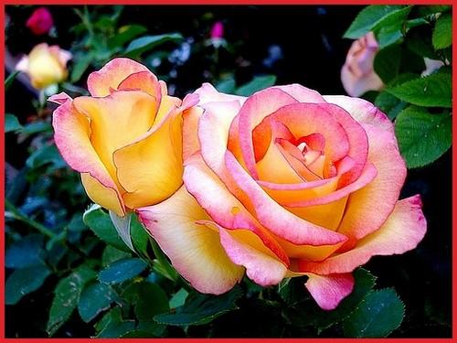 rose-jean-piat-04674.jpg