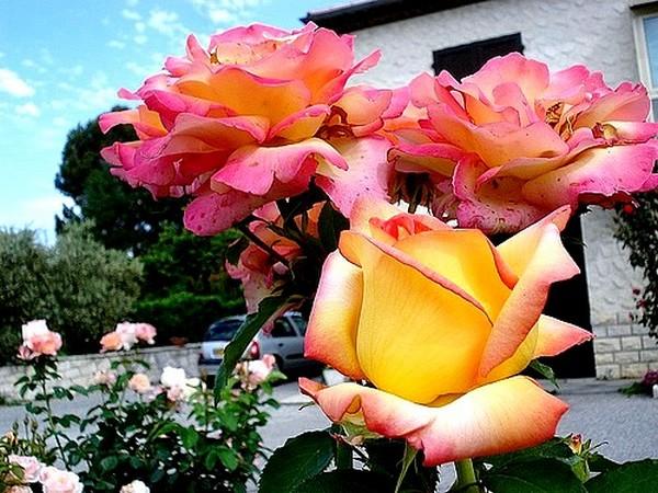 rose-jean-piat-13-04556.jpg