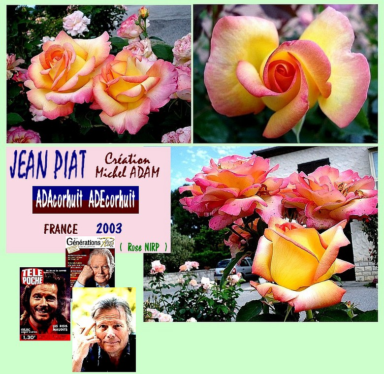 rose-jean-piat-adacorhuit-adecorhuit-roses-passion-04555.jpg