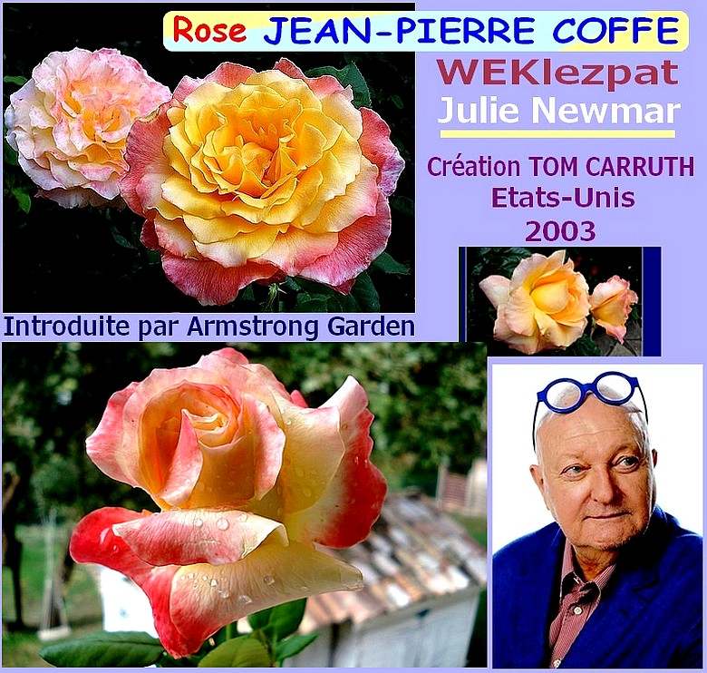 Rose jean pierre coffe 2514