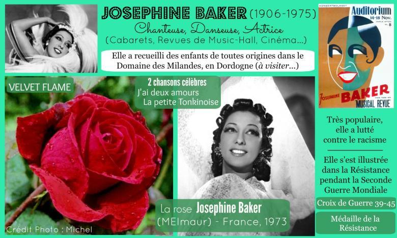 Rose josephine baker meimaur velvet flame meilland 1973 roses passion 2j