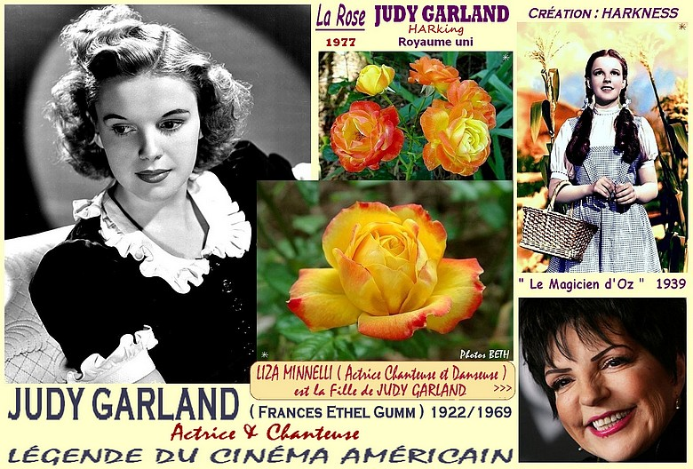 Rose judy garland harking liza minnelli 1977 harkness rosespassion