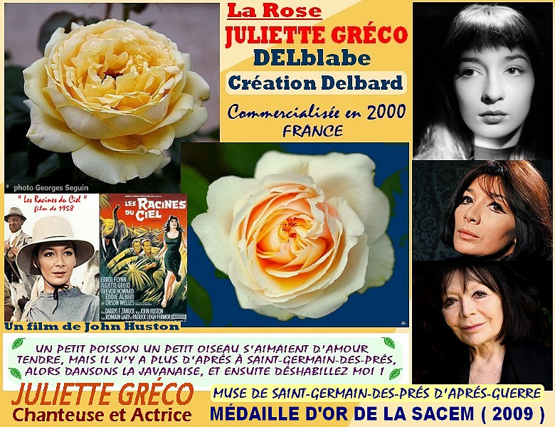 Rose juliette greco delblabe creation delbard france 2000 rosespassion