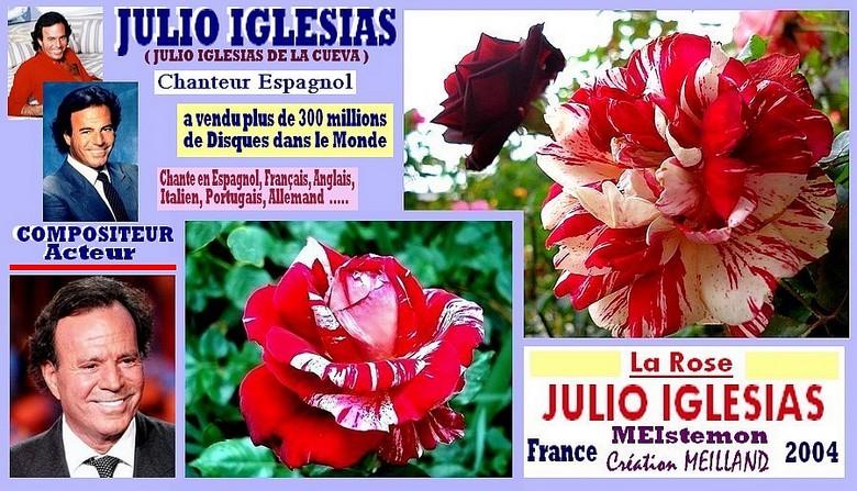 rose-julio-iglesias-meistemon-celebrites-meilland-roses-passion.jpg