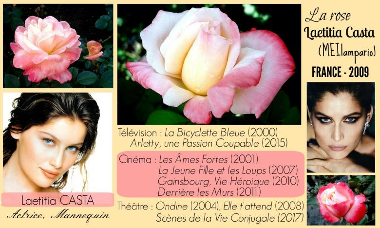 Rose laetitia casta meilampario meilland france 2009 roses passion 2j