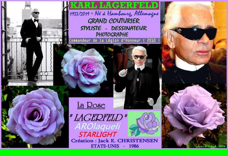 Rose lagerfeld arolaqueli starlight karl lagerfeld jack e christensen roses passion