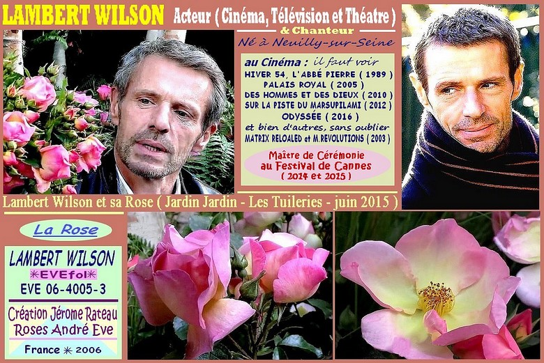 Rose lambert wilson evefol jerome rateau roses andre eve roses passion