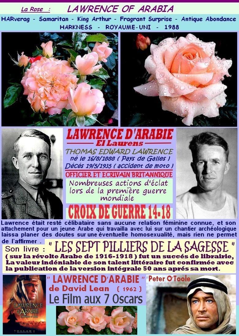Rose lawrence of arabia lawrence d arabie harverag king arthur samaritan fragrant surprise harkness roses passion