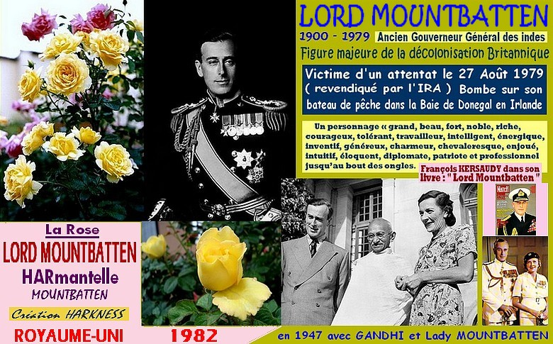 rose-lord-mountbatten-harmantelle-celebrites-mountbatten-roses-passion-r.jpg
