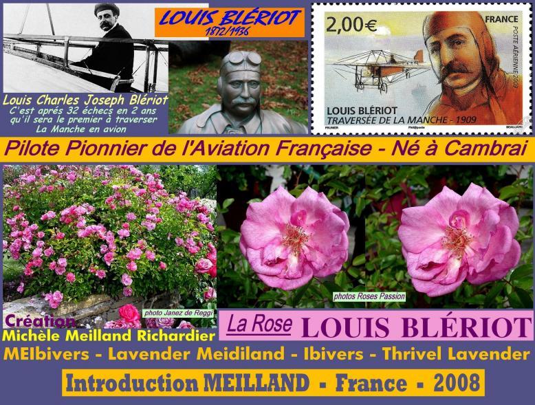 Rose louis bleriot meibivers lavender meidiland ibivers meilland 2008 roses passion