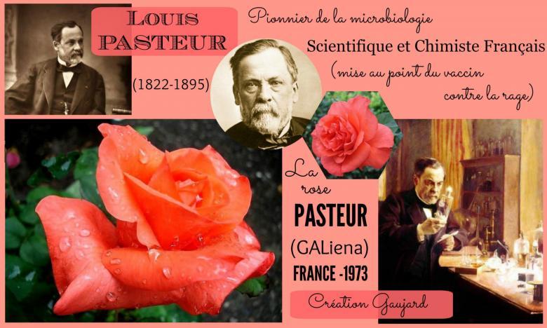 Rose louis pasteur galiena gaujard france 1973 roses passion 2j