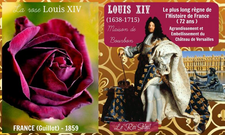 Rose louis xiv guillot france 1859 roses passion 2j