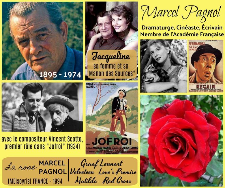 Rose marcel pagnol meisoyris matilda graaf lennart red cross velveteen love s promise meilland