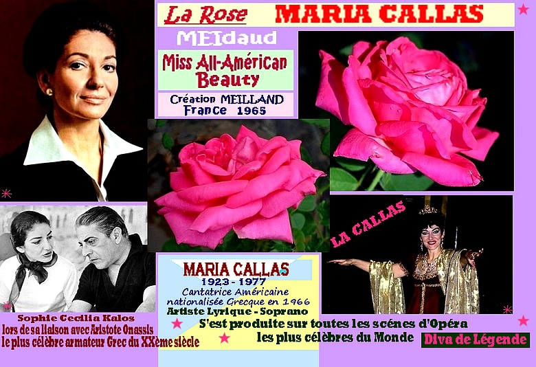 rose-maria-callas-meidaud-miss-all-american-beauty-meilland-onassis-roses-passion.jpg
