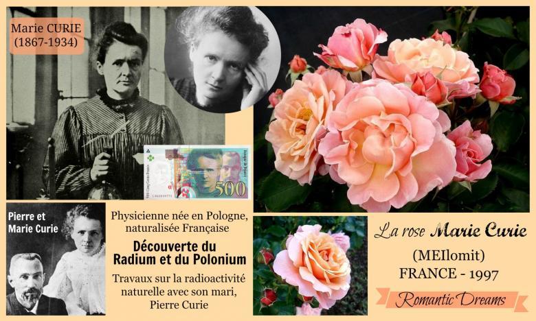 Rose marie curie meilomit romantic dreams meilland 1997 roses passion 2j