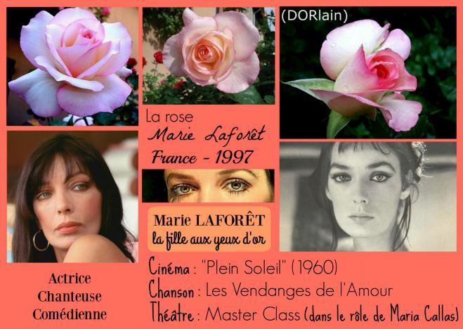 Rose marie laforet dorlain dorieux france 1997 roses passion 2j